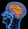 Brain-myth-scan